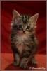 Kitten5-Dille-copyright-YvonnevanderMey-1