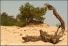 Zandverstuiving hulshorster zand (Copyright Yvonne van der Mey)