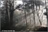 Zonnebanen in het bos / Sunrays in a forest (Copyright Yvonne van der Mey)