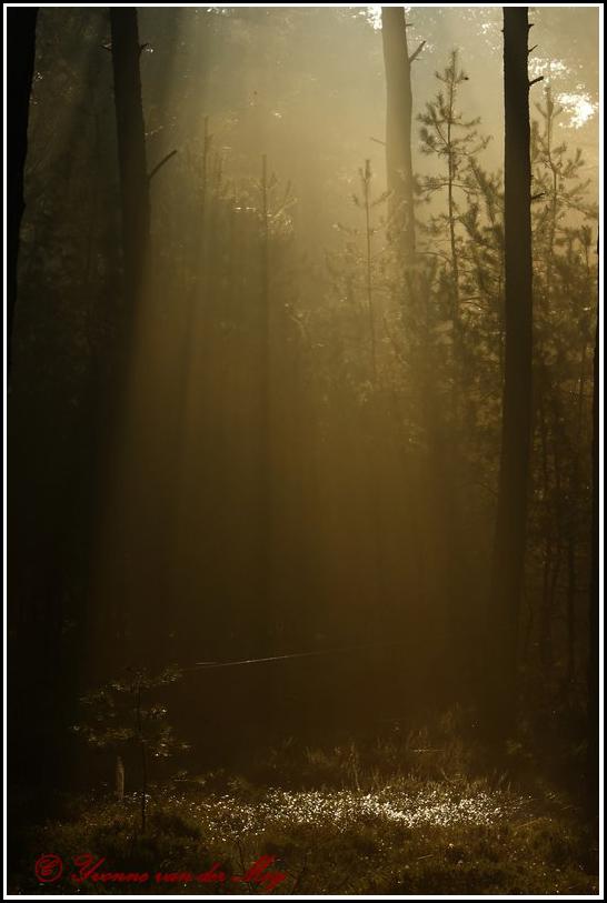 Zonnebanen (Copyright Yvonne van der Mey)