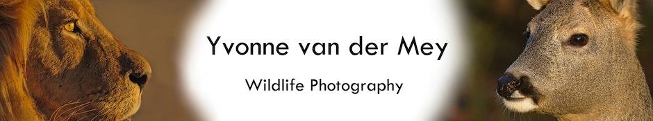 Wildlife foto's door Yvonne van der Mey