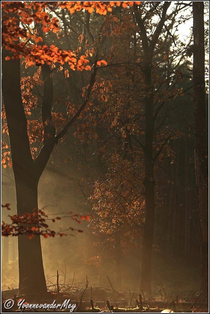 Kleurrijke-winterochtend-copyright-YvonnevanderMey