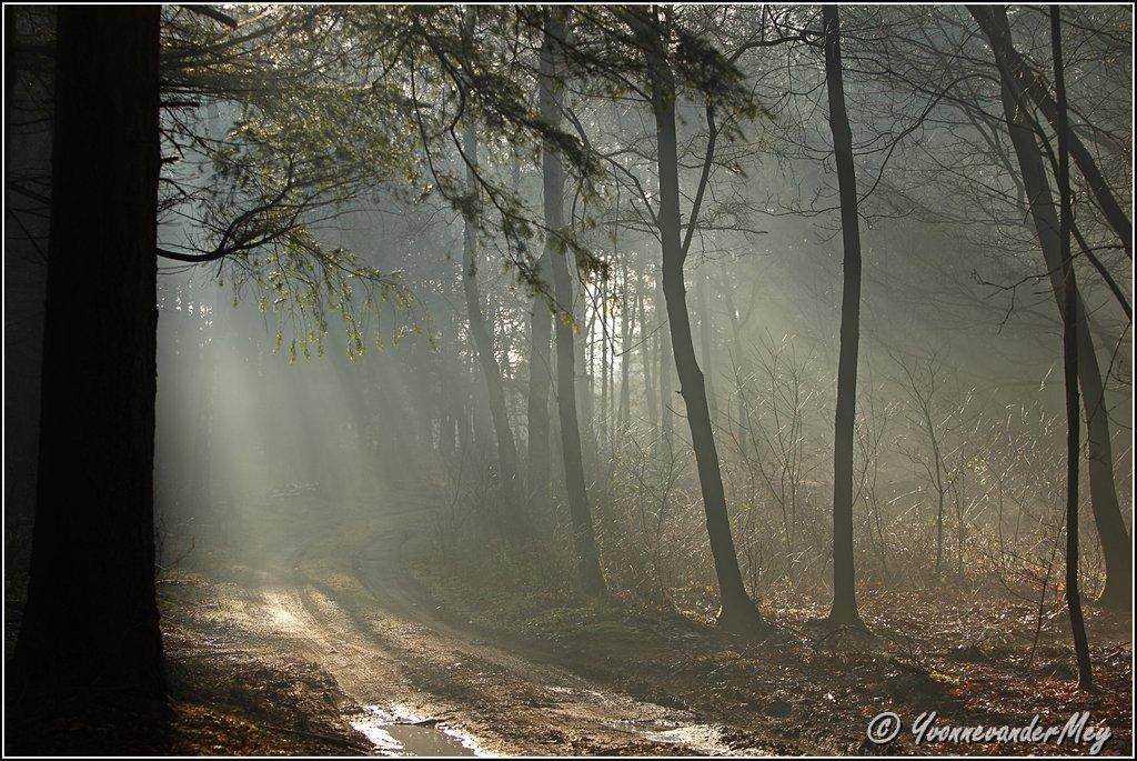 Zonnebanen-Brandnetel-copyright-YvonnevanderMey